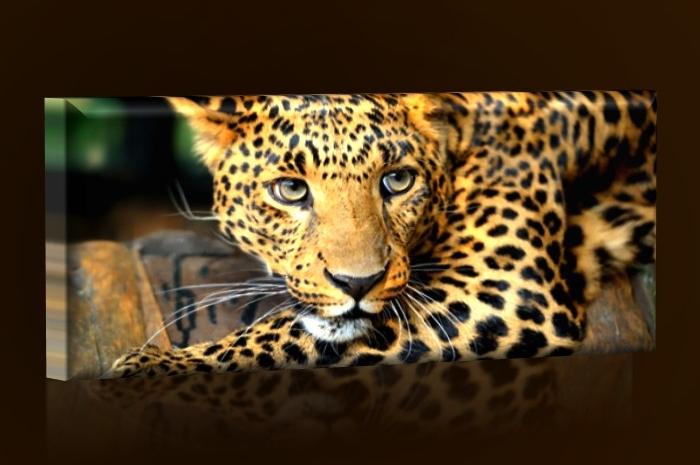 obraz-gepard